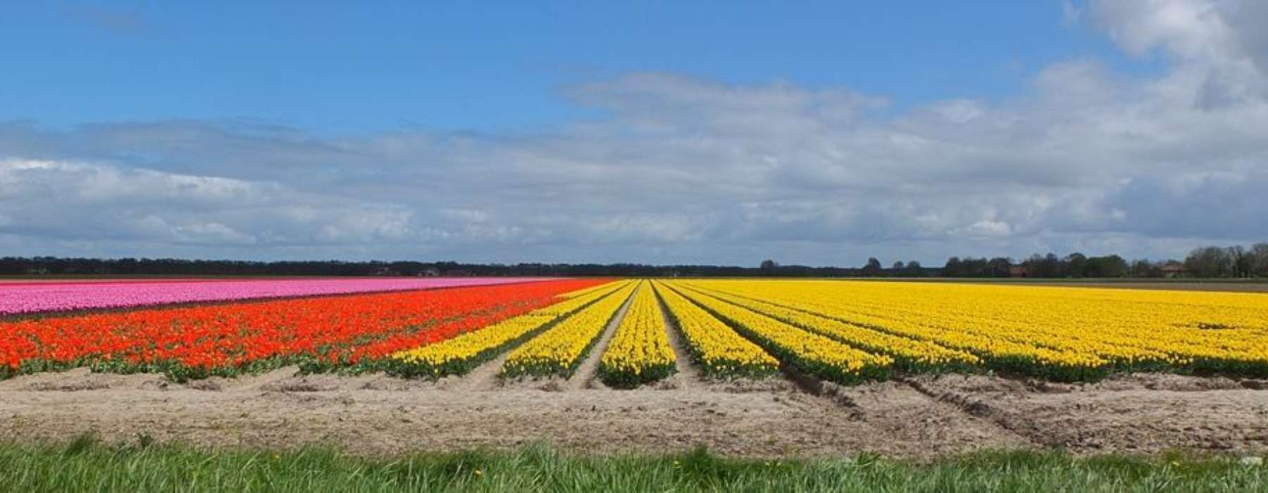Cycle to Flower Field & Polder E-bike - Green Cow Bike Tours
