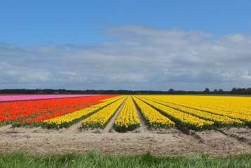 Flower Field & Polder E-bike- Green Cow Bike Tours
